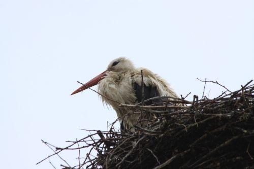 stork bird socket