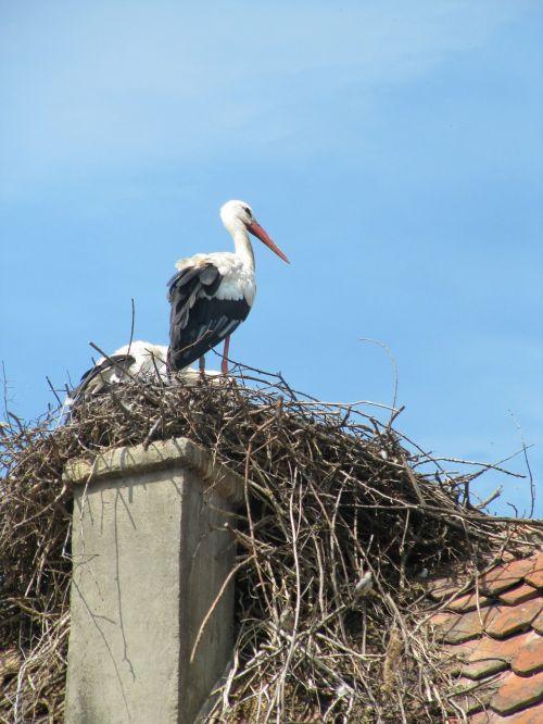 stork ecomusée ungersheim