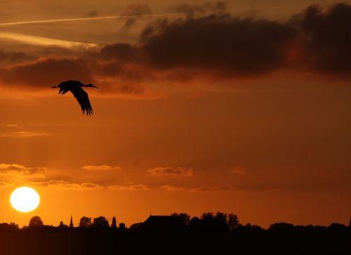 stork sunset friesland