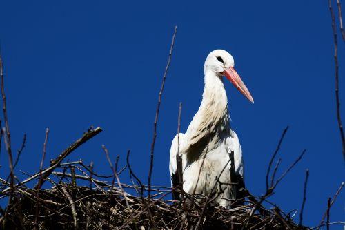 stork nest storchennest