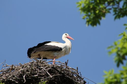 stork city marchegg castle