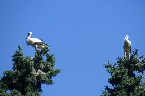 gandra pora,paukščio parkas,Walsrode,parkas,makro,paukščių parkas Walsrode,paukštis,trejetas