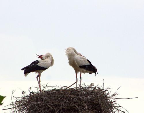 stork couple welcome ritual