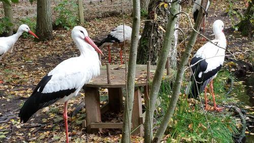 storks animals nature