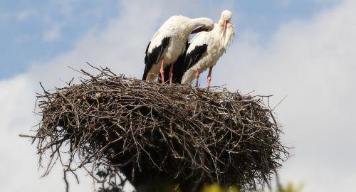 storks sky couple