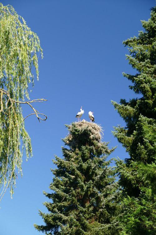 gandrai,trejetas,lizdas puoselėti,paukščio parkas,Walsrode,parkas,makro,paukščių parkas Walsrode,paukštis