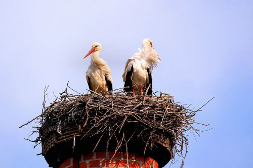 storks birds screaming birds