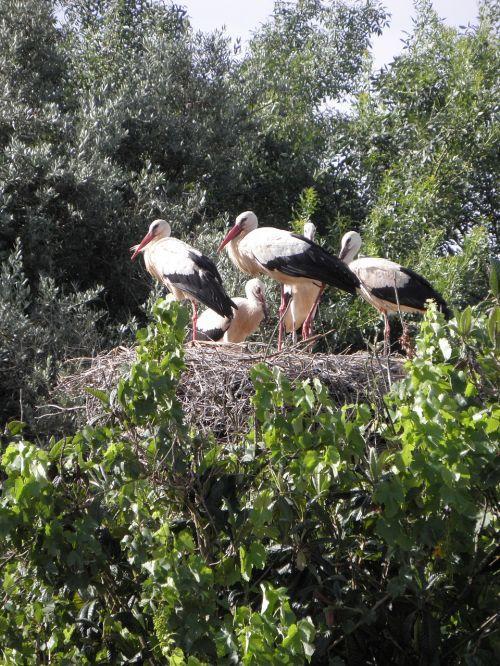 storks stork ready