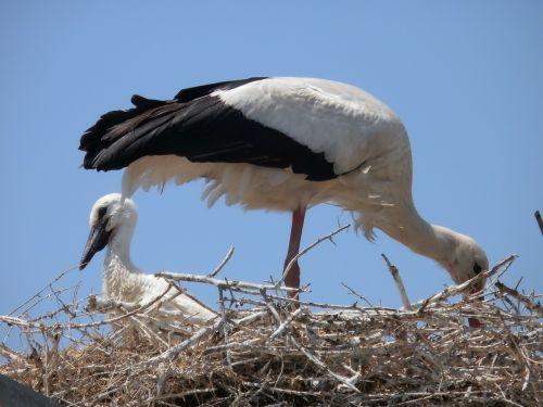 storks animals camargue