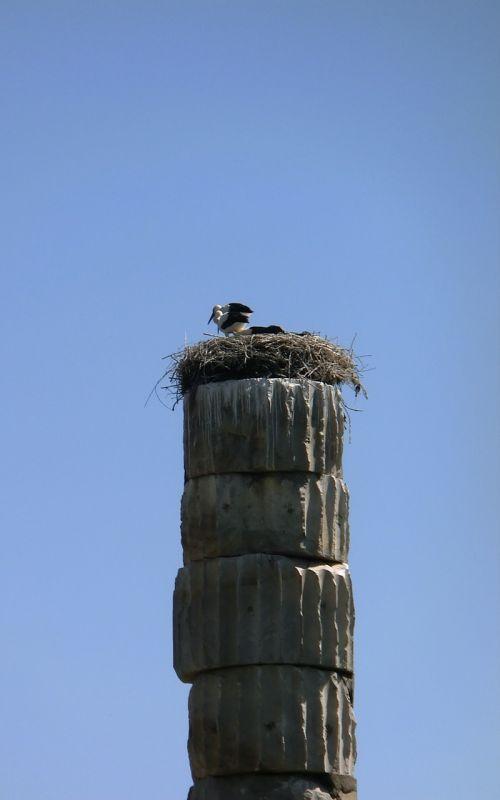 storks ephesus birds