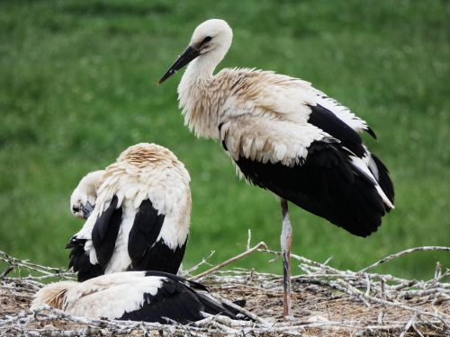 storks nest storchennest