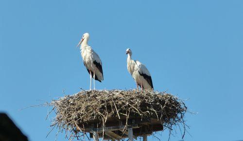 storks nest roof