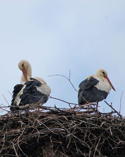 storks bulgaria spring