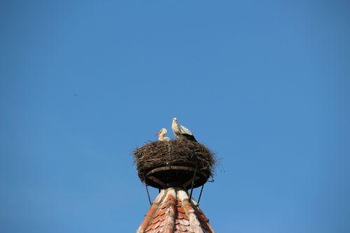 storks nest bird