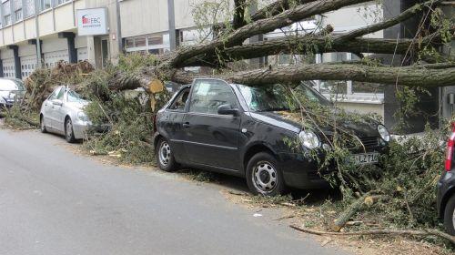 storm damage fallen tree font font class danger font font