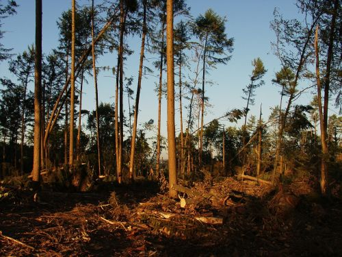 storm damage forest trees