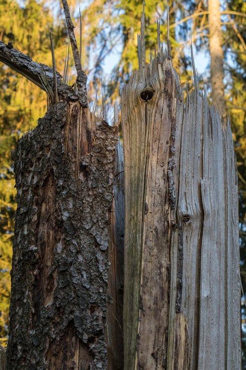 storm damage  tree  storm