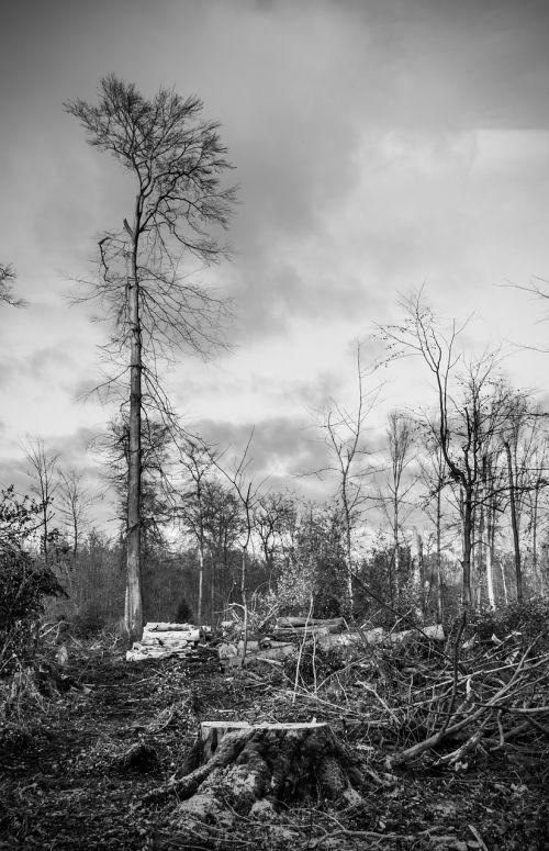 storm damage forest devastation