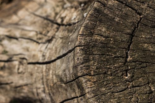 strain stump depth of sharpness