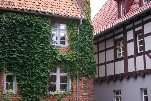 stralsund,old house,architecture,prussian wall,street,facade,creeping plant,creeper plant