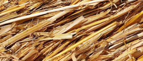 straw harvest agriculture