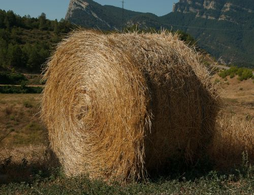 straw livestock forage