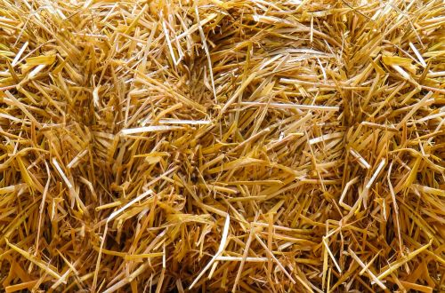 straw autumn straw bales