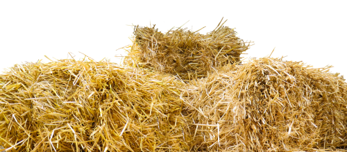 straw straw bales isolated
