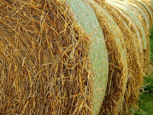 straw field agriculture