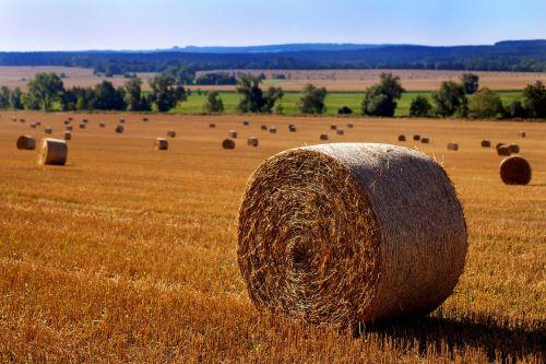 straw straw bales field