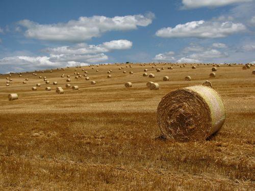 straw bale meadow