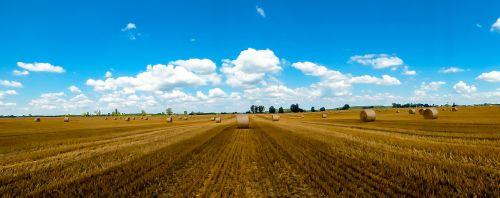 straw straw bale harvest