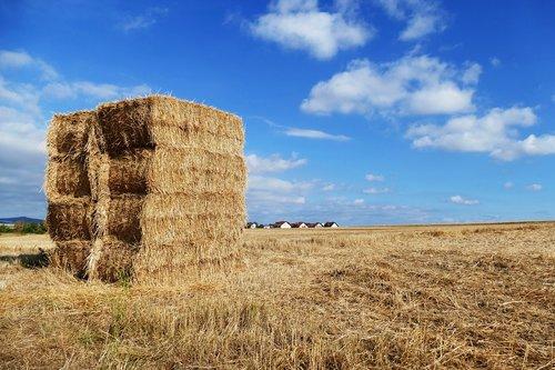 straw  hay  harvest
