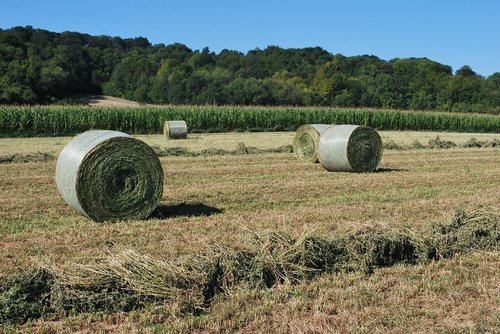 straw  bundles  agriculture