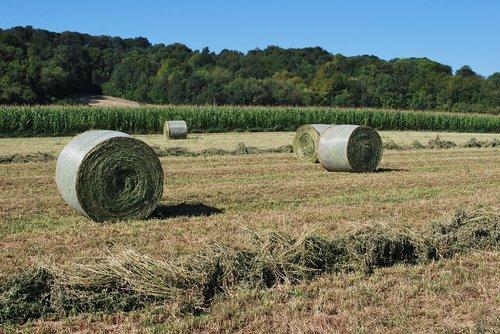 straw  bundles  agriculture
