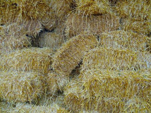 straw straw bales farm