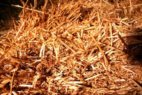 straw straw bales bale