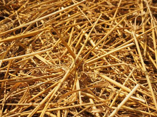 straw straws field
