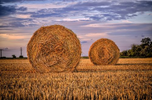 straw bale field nature