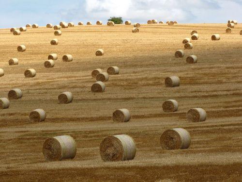 šiaudų ryšulys,pieva,vasara,Žemdirbystė,derlius,kraštovaizdis