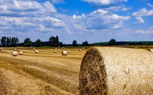 straw bale straw field