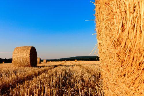 šiaudai,kiškis,Žemdirbystė,vasara,šiaudai,derlius,saulė,horizontas,kraštovaizdis