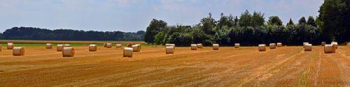 straw bales panorama round bales