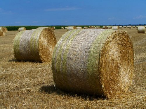 straw bales harvested crops agriculture