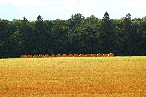 straw bales straw field