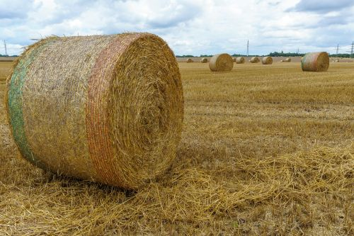 straw bales field hay