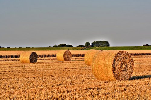 straw bales  harvest time  straw