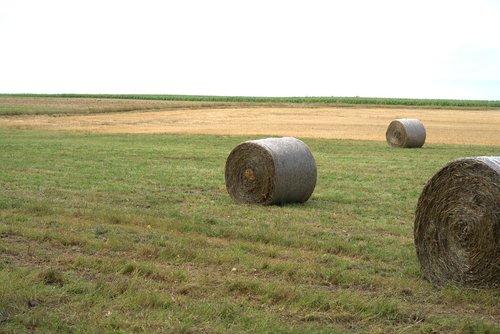 straw bales  straw  harvest
