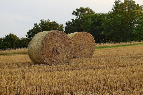 straw bales  stubble  agriculture