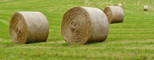 straw bales harvest field